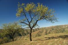 Árvores de amêndoa na região de Alpujarra, Spain Fotografia de Stock Royalty Free