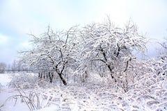 Árvores de Aple na neve imagens de stock royalty free