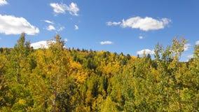 Árvores de Aspen no outono Imagens de Stock Royalty Free