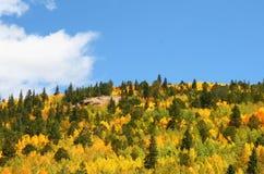 Árvores de Aspen no outono Imagem de Stock Royalty Free