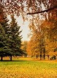 Árvores de Autamn fotografia de stock