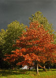 Árvores de Autum com nuvens de tempestade imagem de stock royalty free