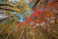 Árvores de Autunm Fotos de Stock Royalty Free