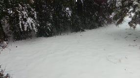 Árvores de azevinho rurais do dia da neve do país Fotografia de Stock