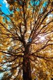 Árvores de baixo sobre de uma tarde de caminhada foto de stock