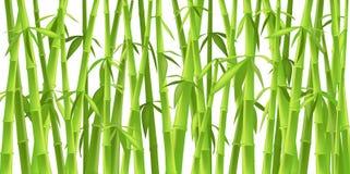 Árvores de bambu chinesas Fotos de Stock