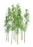 árvores de bambu da rendição 3D no branco Imagem de Stock