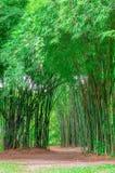 Árvores de bambu em Tailândia Imagens de Stock