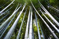 Árvores de bambu que alcançam para o céu Fotografia de Stock Royalty Free