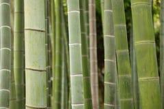 Árvores de bambu verdes do fundo em Japão Fotografia de Stock Royalty Free