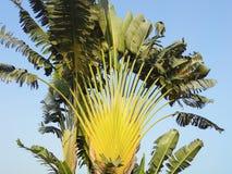 Árvores de banana contra o céu imagem de stock royalty free