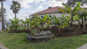 Árvores de bananas fotografia de stock