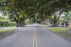 Árvores de Banyan gigantes em Coral Gables Fotografia de Stock Royalty Free