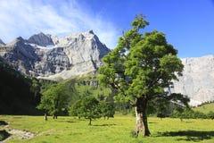 Árvores de bordo Foto de Stock
