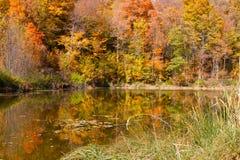 Árvores de bordo coloridas de Ontário com folha m do outono fotos de stock