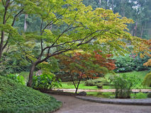 Árvores de bordo japonês Imagens de Stock Royalty Free
