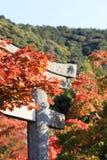 Árvores de bordo japonês luxúrias em torno do templo de Eikando foto de stock