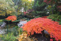 Árvores de bordo no jardim japonês Fotos de Stock Royalty Free
