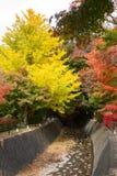 Árvores de bordo vermelho e árvores amarelas da nogueira-do-Japão ao longo do cannel em Kawaguchiko imagens de stock royalty free