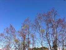árvores de Brasil Fotos de Stock Royalty Free