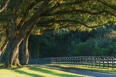 Árvores de carvalho verde americano sobre a estrada Fotografia de Stock