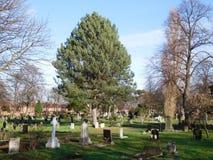 Árvores de Cemetry Fotos de Stock