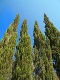 Árvores de Chipre e céu azul imagens de stock royalty free