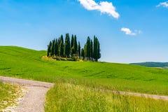 Árvores de ciprestes no campo montanhoso de Toscânia imagens de stock royalty free