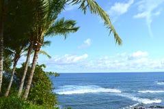 Árvores de coco Fotografia de Stock Royalty Free