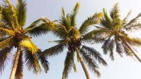 Árvores de coco Foto de Stock Royalty Free