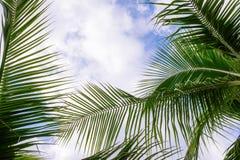 Árvores de coco contra o céu azul Palmeiras na costa tropical fotografia de stock