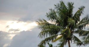 Árvores de coco durante uma tempestade imagem de stock