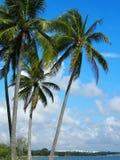 Árvores de coco e céu nebuloso Fotografia de Stock Royalty Free