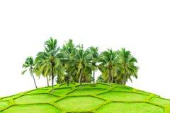Árvores de coco e campo da grama bonita isolados no fundo branco com trajeto de grampeamento Fotografia de Stock