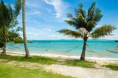 Árvores de coco e uma rede Imagem de Stock Royalty Free