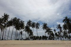 Árvores de coco em um dia ensolarado Imagens de Stock