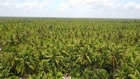 Árvores de coco em Vietname Fotografia de Stock