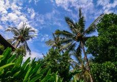 Árvores de coco na ilha de Lombok, Indonésia imagens de stock royalty free