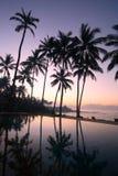 Árvores de coco no nascer do sol Imagem de Stock Royalty Free