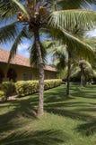 Árvores de coco no recurso Foto de Stock Royalty Free