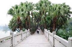 Árvores de coco pelo lago Imagem de Stock Royalty Free