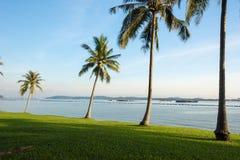 Árvores de coco perto da praia imagens de stock