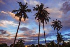 Árvores de coco sob o céu crepuscular Fotografia de Stock