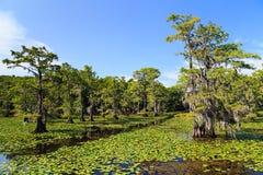 Árvores de Cypress no lago Caddo imagem de stock
