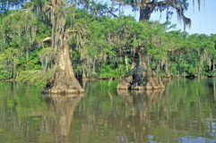 Árvores de Cypress parque estadual de Fausse Pointe na albufeira, lago, Louisiana Fotos de Stock Royalty Free