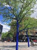 Árvores de Denver Blue imagens de stock royalty free