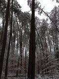 Árvores de dobra foto de stock royalty free
