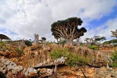 Árvores de Dragon Blood Tree e da garrafa no Socotra, Iémen imagem de stock