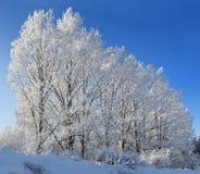 Árvores de encontro ao céu azul Imagens de Stock Royalty Free