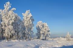 Árvores de encontro ao céu azul Foto de Stock